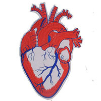 Anatomical Heart embroidered patch (ep101)